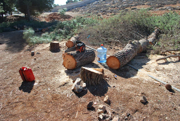 research paper in illegal logging Carbon emission, rainforest, soil erosion - government regulation of illegal logging and deforestation.