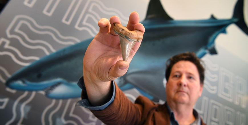 Teeth from ancient mega-shark discovered on Australian beach
